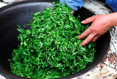 Зеленый чай. Разновидности, производство, польза. 2